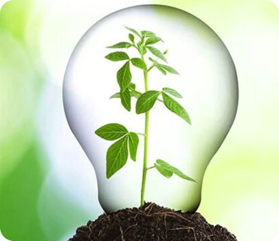 light bulb with a plant inside to represent green energy